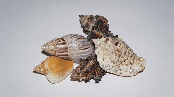 Mussels, Deco, Maritime, Decorative, Flotsam, Memory