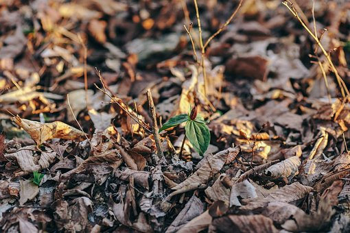 Spring, Plant, Woods, Leaves, Forest, Nature, Natural