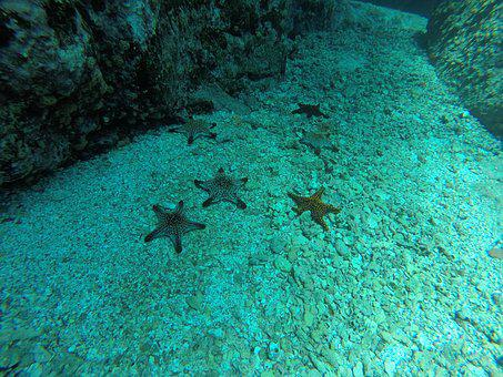 Sea Star, Sea ​​bottom, Diving, Nature, Sea, Ocean