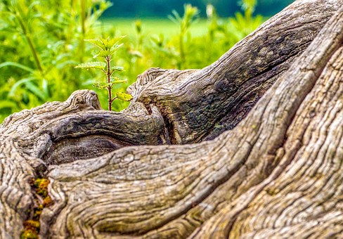 Wood, Trunk, Gnarly, Summer, Nature, Meadow, Plant