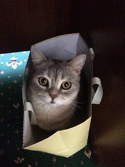 Cat, Cat In The Bag