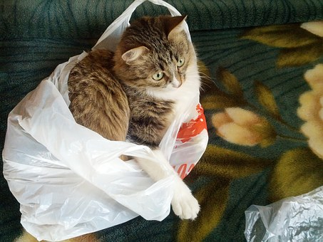 Cat, Cat In The Bag, Fun, Pets