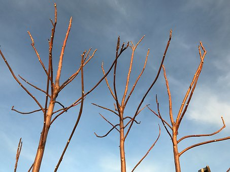 Branches, No Sheets, Winter, Tree, Sky, Kahl