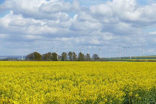 Field Of Rapeseeds, Clouds, Sky, Yellow, Blue