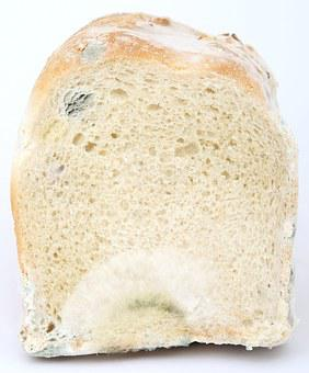 Age, Bacteria, Bio, Biology, Bread, Breakfast, Bug