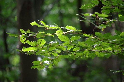 Tree, Foliage, Light, Sun, Yellow, The Splendor Of The