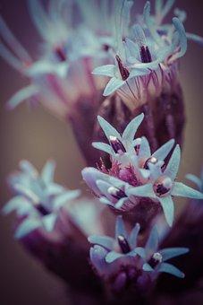 Liatris Spicata, Splendor Notch, Shrub, Flower, Plant