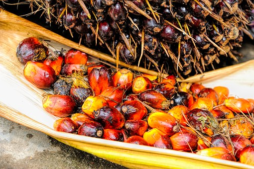 Palm, Oil, Fruit, Background, Ripe, Red, Produce
