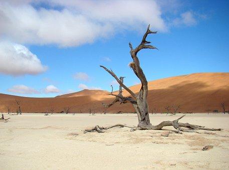 Tree, Desert, Sand, Dune, Landscape, Sossusvei