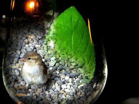 Sparrow, Sperling, Bird, Glass, Photo Montage