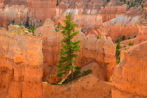 Bryce Canyon, Hoodos, Usa, Tree, National Park, America