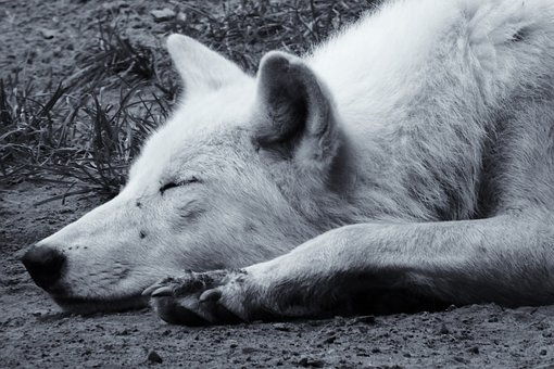 Retro, Black And White, Monochrome, Nostalgic, Animal