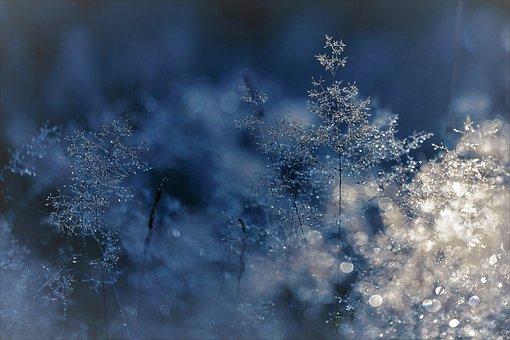 Winter, Cold, Grasses, Blue, Frost, Shrub