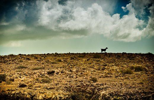 Wilderness, Goat, Stormy, Rocks, Desert, Landscape