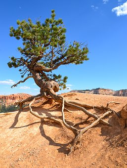 Bryce Canyon, Hoodos, Tree, Usa, National Park, America