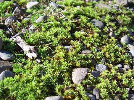Moss, Ground, Nature, Fauna, Green, Natural, Plant