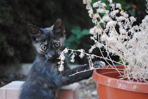Cat Doing Gardening, Kitten Gardening, Fun Kitten, Cat
