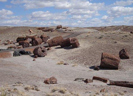 Petrified Forest National Park, Petrified, Fossils