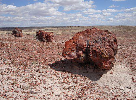 Petrified Forest National Park, Petrified, Fossils