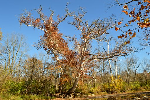 Tree, Majestic, Scenic, Season, Autumn, Scenery, Nature
