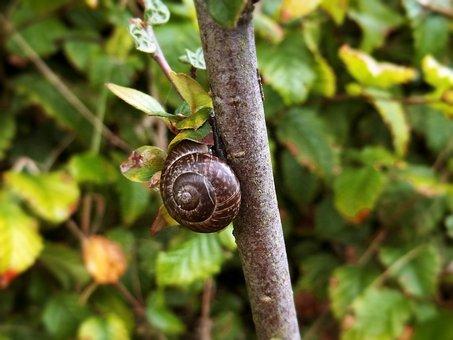 Snail, Branch, Nature, Summer, Plant, Animal World