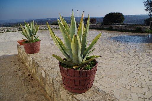 Barsento, Puglia, Campaign, Apulia, Nature, Plant