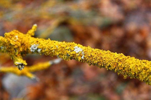 Wood, Yellow, Autumn, Seasons, Nature, Tree Disease
