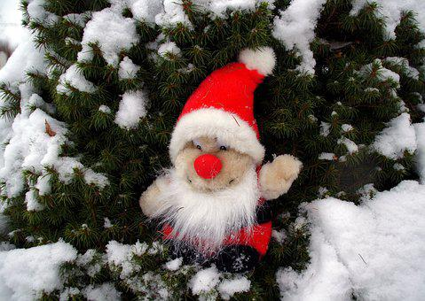 Brownie, The Elves, Christmas, Snow, Toys, Winter, Pine