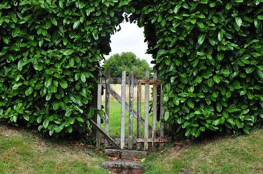 Goal, Hedge, Garden Gate, Input, Wooden Door
