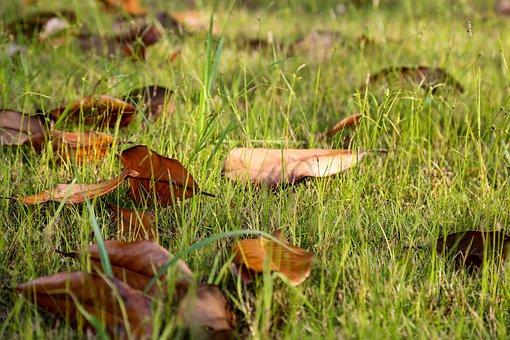 Defoliation, Grass, Early Autumn, Autumn, Leaf