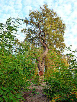 Pasture, High Tree, Blue Sky, Fleecy, Autumn Walk, Blue