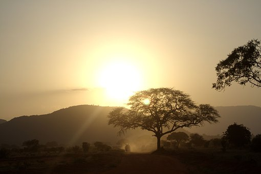 Africa, Sunset, Trees, Holiday
