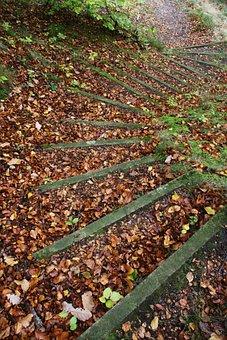 Gradually, Leaves, Autumn, Nature, Forest, Walk
