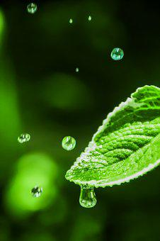 Water Drop, Leaf With Dew, Leaf With Drop, Dripping