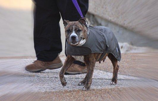 Dog, Jacket, Pet, Wearing, Canine, Mammal, Domestic