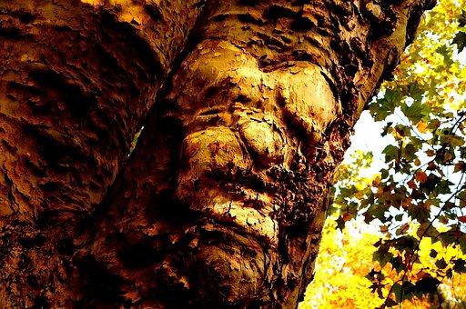 Nature, Tree, Tribe, Log, Old Tree, Tree Face, Fantasy