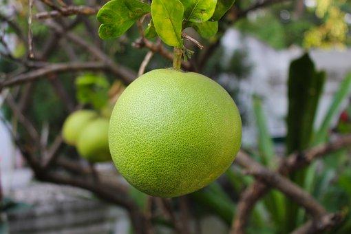 Pomelo, Fruit, Citrus, Healthy, Fresh, Tropical