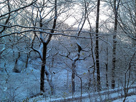 Winter, Forest, Fairytale Landscape, Tree, Nature, Snow