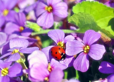 In The Fragrance Noise, Ladybug, Floral, Purple, Sun
