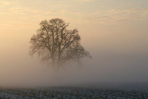 Winter, Fog, Snow, Morning Light, Cold, Landscape
