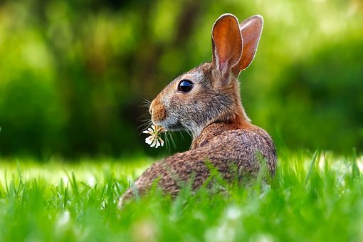 Rabbit, Hare, Animal, Cute, Adorable, Lawn, Grass