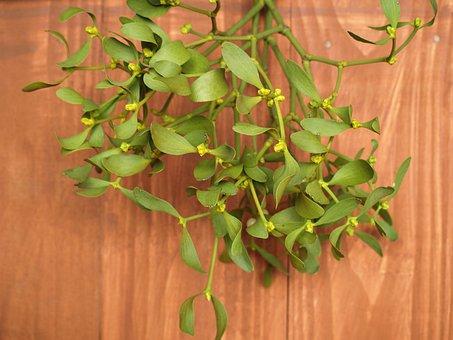 Mistletoe, Sprig, Holidays, Plant, Happy Holidays