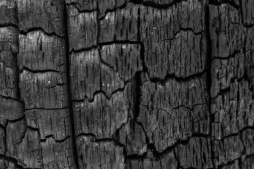 Coal, Charred Tree, Pore, Black
