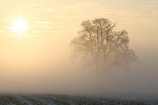 Winter, Fog, Sun, Morning Sun, Morning Light, Cold