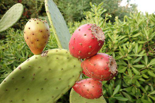 Cactus, Thorn, Quills, Plant, Flower, Thorns, Botany