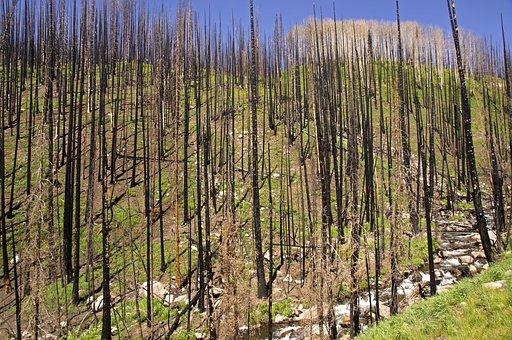 Forest Fire, Burned, Fire, Forest, Burn, Nature, Black