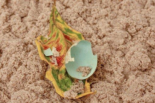 Egg, Nature, Eggshell, Foliage Leaf, Broken, Spotted