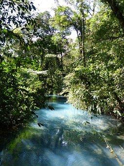 Jungle, Tree, Central America, Tropical, Green