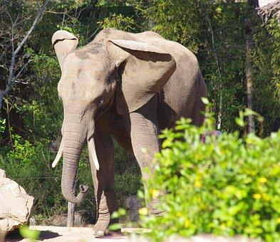 Elephant, Zoo, The Arrow