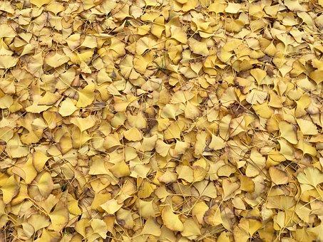 Leaves, Yellow, Fall, Autumn, Texture, Pattern, Floor